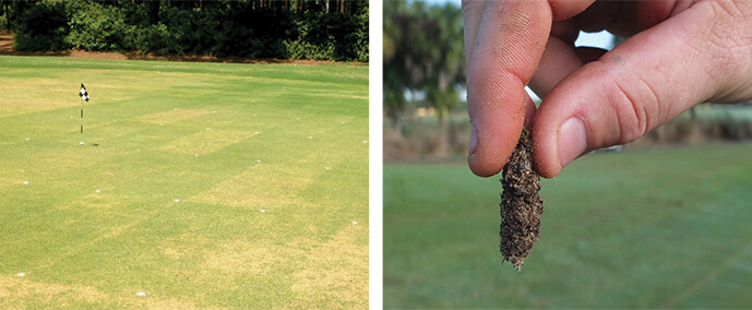 Nematode Damage