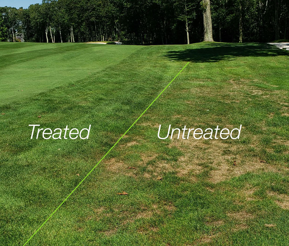 ABW treatment in Boston, MA One application in May. Results shown in June.